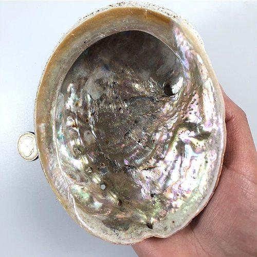 11-12CM Natural Abalone Shells Seashell Home Aquarium Landscape DIY Decor Soap Holder Nautical Home Decor