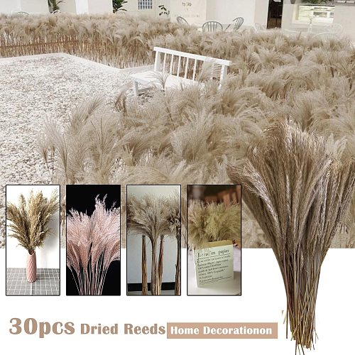 Natural Dried Flower Palm Leaf Fan Plant Palm Dried Tree Leaves Home Garden Wedding Party Bedroom Decoration Wedding Decor