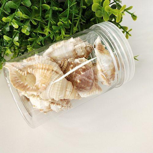 1box sea conch sea star Snail Cat Sea Snail Natural Shell Fish Tank Landscape Design Home Decoration Scallop Fish Specimens