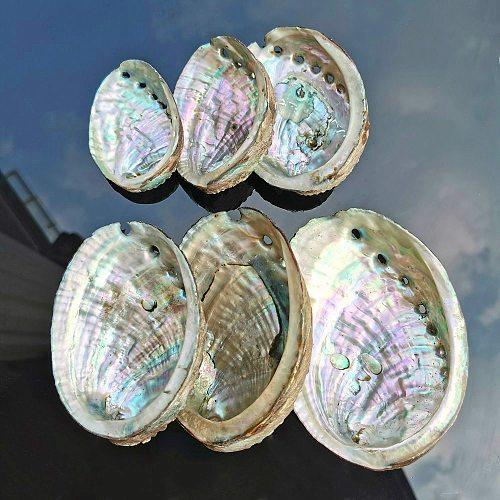 5 Sizes Abalone Shell Nautical Decor Seashell Beach Wedding Shells Ocean Decor Jewelry DIY Shell Soap Dish Aquarium Home Decor
