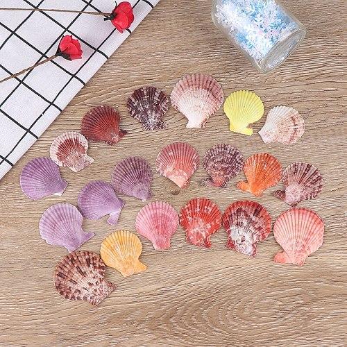 5/10/20pcs Colorful Natural Seashells Decorations Scallop Shells Crafts Decor Ornament hot sale