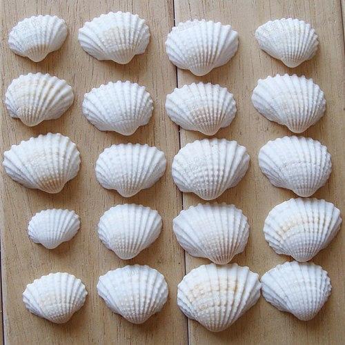 20pcs Aquarium Seashells Craft Decor Natural DIY Shell Conch Starfish Landscape Tank Decorative Ornaments Nautical Home Decor