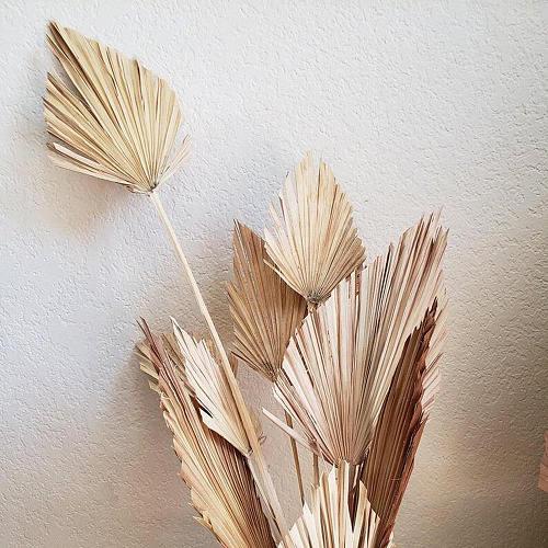 Palm Fan Leaf Dried Flower Natural Dried Palm Leaf Fan Plant DIY Party Art Wall Hanging Wedding Decor