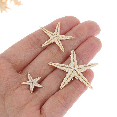 100pcs Sea Shells Size:0.5-3cm Mini Starfish Craft Decoration Cottage Wedding Decor Crafts Natural  DIY Beach Mascot