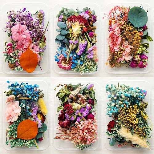 1 Pcs Real Dried Flower Dry Plants For Aromatherapy Candle Epoxy Resin Pendant Necklace Jewelry Making Craft DIY Accessories