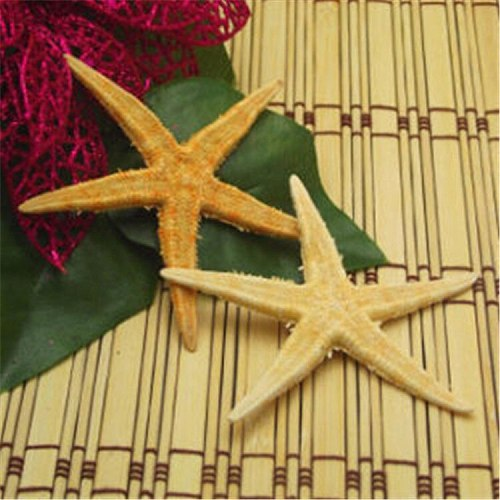 10pcs/lots Natural Crafts Starfish Sea Shells Star Flowers and Gifts Decoration Conch Shells Special offer Aquarium Decoration