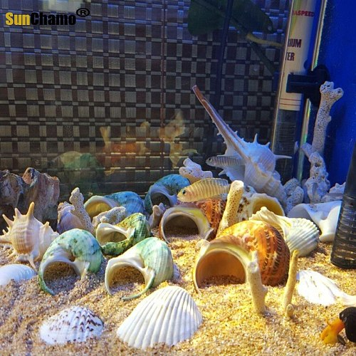 Spiral Shell Fish Tank Shellfish Hermit Crabs Tank Decoration Natural Shell Conch Decoration Crafts Micro-landscape Specimens
