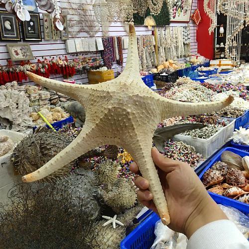 23-40cm natural shell window ornaments sea star starfish  sea shell starfish large seashell star sea  star decoration