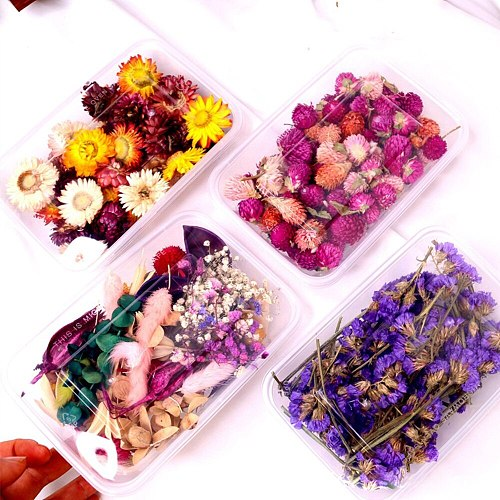 Real Dried Flower Dry Plants For Wedding Party Home Decor DIY Craft Aromatherapy Candle Necklace Jewelry Making Craft Candle Dec