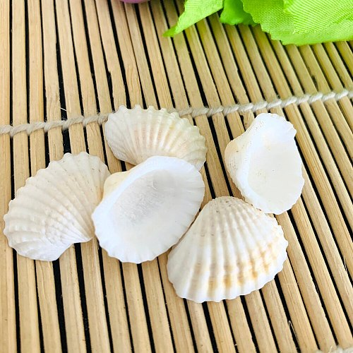 5pcs starfish Sea Shells Schelpen Coquillage Conchas Shell For Home Decoration Babylon Nautical Home Marine Decor Scallop