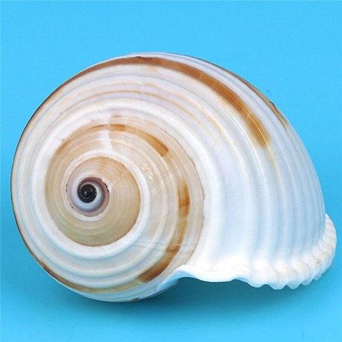 1pc Natural Striped Shell Conch Coral Sea Snail Home Office Ornament Fish Tank Aquarium Landscape Decoration