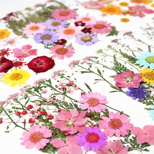 1 piece Colorful Real Dried Flower Dry Plants For Candle Epoxy Resin Pendant Necklace Jewelry Making Craft DIY Accessories