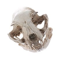 Resin Fairy Witch Cat Skull Miniature Crafted Resin Figurine Skeleton Models