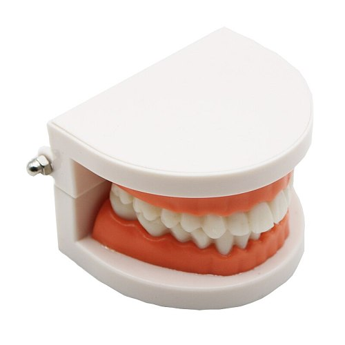 1 pcs Teeth Model Pro Adult White Teeth Model Standard Dental Teaching Study Typodont Demonstration Oral Medical Education Tools