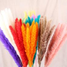 7Pcs Bulrush Natural Dried Flowers Small Pampas Grass Phragmites Artificial Plants DIY Fake Flower Bunch Wedding Home Decoration