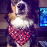 Reversible Dog Scarf Pet Dog Bandana Bib Pet Accessories Triangular Bandage Adjustable Tie On for Cat Puppies Medium Large Dogs