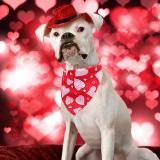 Cat Dog Bandana Valentine's Day Pet Bibs Scarf Adjustable Pet Neckerchief Scarf Waterproof Saliva Towel For Small Medium Dogs