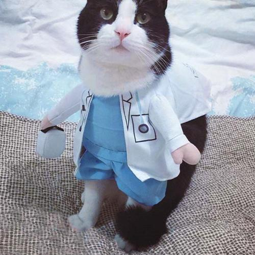 Pet Halloween Costume Dog Cat Doctor Costume Pet Doctor Clothing White Funny Cosplay Outfit Uniform