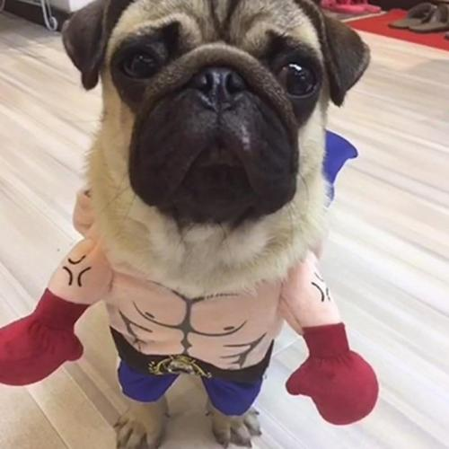 Funny Dog Cat Costumes Pet Boxer Cosplay Clothing Halloween Puppy Dogs Costume Accessories