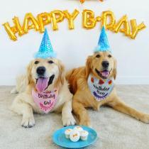 Birthday Dog Bandana Dogs Bibs Cotton Scraf Dogs Neckerchief Pet Costume For Birthday Gift Cute Cat Dog Accessories