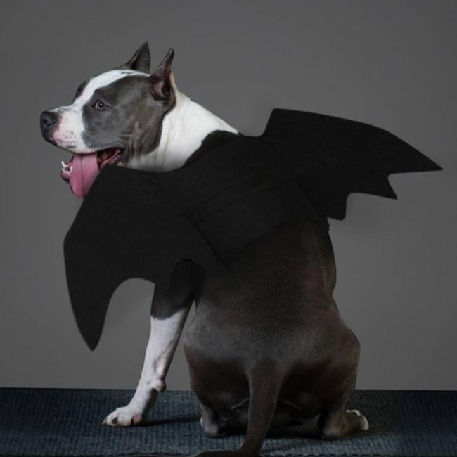 Pet Cat Dogs Halloween Cosplay Funny Costume For Dog Cats Puppies Kittens Black Bat Wings