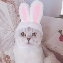 Pet Hat Cat Clothes Bunny Rabbit Ears Hat Pet Cat Cosplay Clothes For Cat Costumes Dogs Kitten Party Costume gatos accesorios