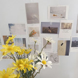 Photo Decoration Card Set 30 Sheets Art Photography Props