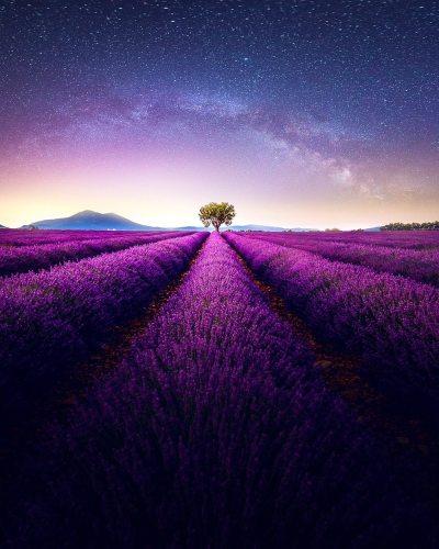 2021 Best Hot Sale Landscape Lavender Paint By Numbers Kits Uk VM92104