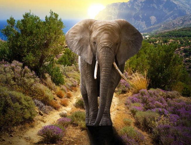 2021 New Arrival Animal Walking Elephant Diy Paint By Numbers Kits UK RA3205