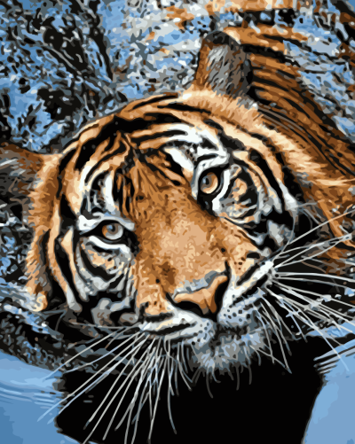 2021 Best Hot Sale Tiger Paint By Numbers Kits Uk WM748
