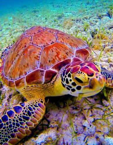 2021 Turtle Diy Paint By Numbers Kits Uk VM90135