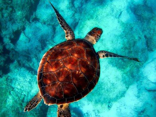 2021 Turtle Diy Paint By Numbers Kits Uk VM91445
