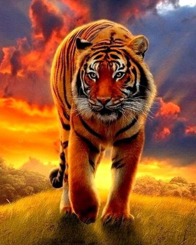Animal Tiger Diy Paint By Numbers OTG6119