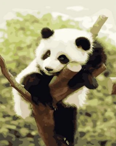 Panda Diy Paint By Numbers Kits XQ1274