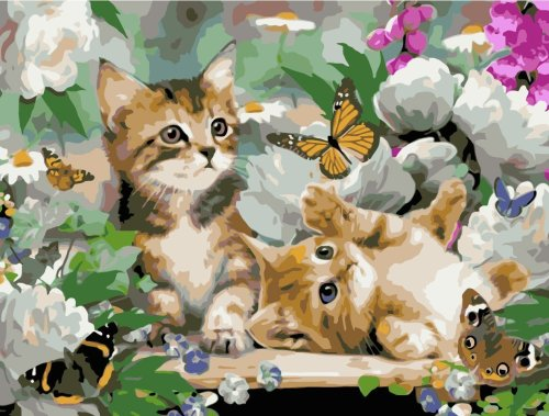 Cat Diy Paint By Numbers Kits WM1482