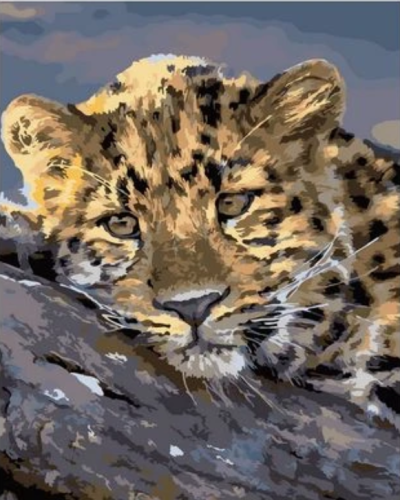 Animal Leopard Diy Paint By Numbers Kits XQ2029