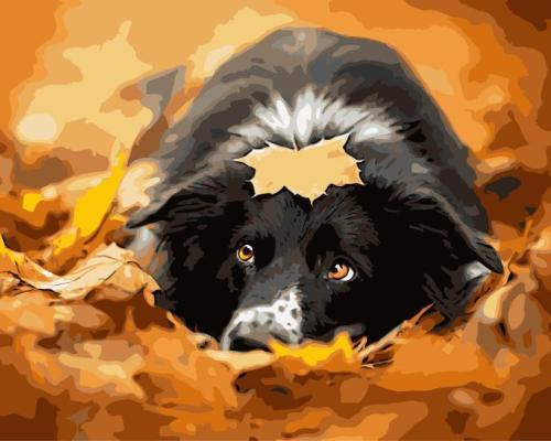 Maple Leaf Dog Diy Paint By Numbers Kits SY052
