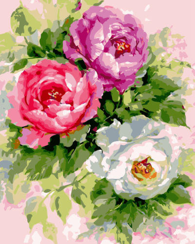 Peony Diy Paint By Numbers Kits SY67