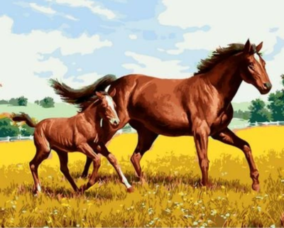 Animal Horse Diy Paint By Numbers Kits XQ1448