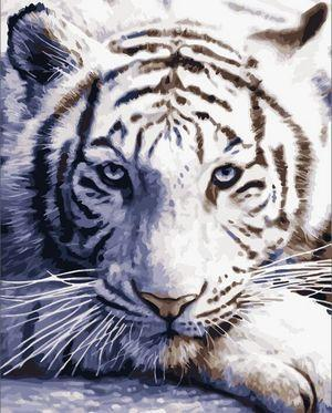 Animal Tiger Diy Paint By Numbers Kits VM80019