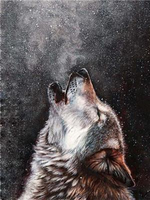 Wolf Diy Paint By Numbers Y5581