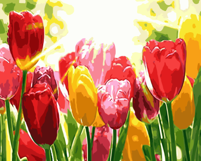Tulips Diy Paint By Numbers Kits WM777