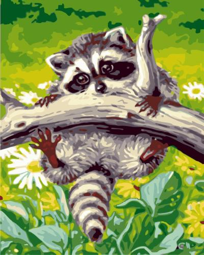 Raccoon Diy Paint By Numbers Kits WM357