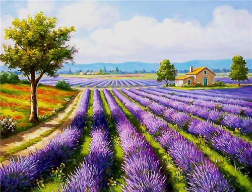 Landscape Lavender Diy Paint By Numbers BN90414