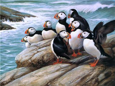 Hot Sale Animal Diy Paint By Numbers Y5658