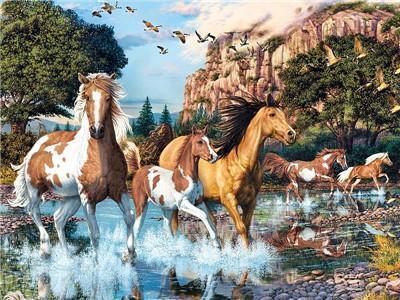 Hot Sale Animal Diy Paint By Numbers Y5675