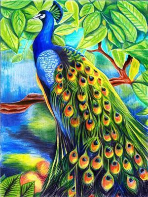 Hot Sale Animal Diy Paint By Numbers Y5807