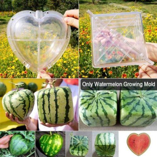 Fruit Growth Shaper