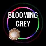 Blooming Grey