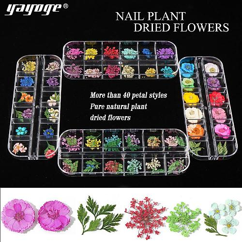 Dry Flower DIY Adhesive Nail Art Decors Stickers FL